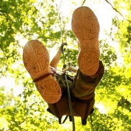 Adventure Tree Climbing