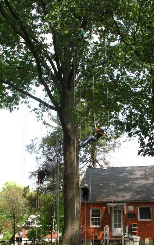 Tree Climbing at EarthDance